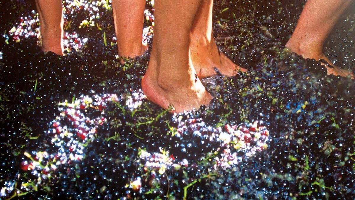 sărbătoarea tămâioasei - strivitul strugurilor cu picioarele